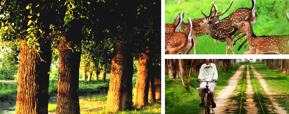 Lahore-